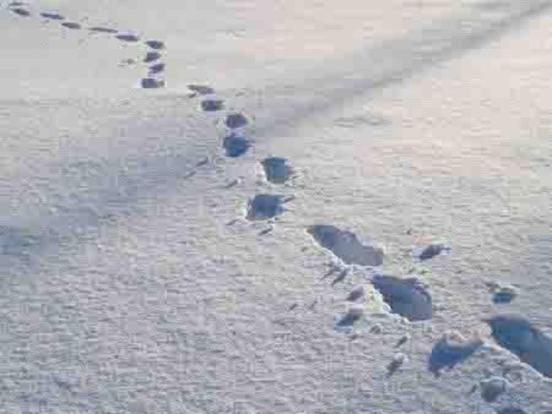 FOOTPRINTS+IN+SNOW+for+web1